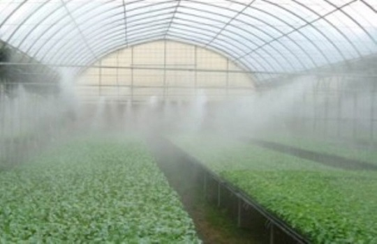 Special Fog Systems for Greenhouses