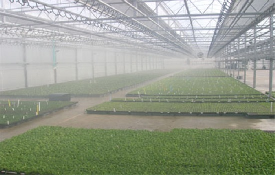 What is the Privilege of Greenhouse Humidific